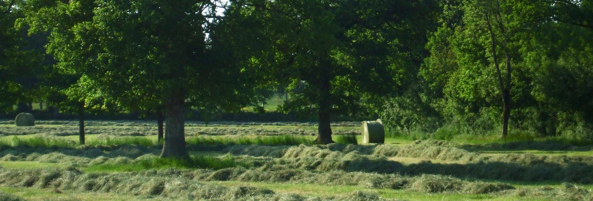 Image d'accueil prairie